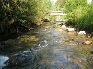 rio-selva-1